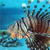 דגי זהרון